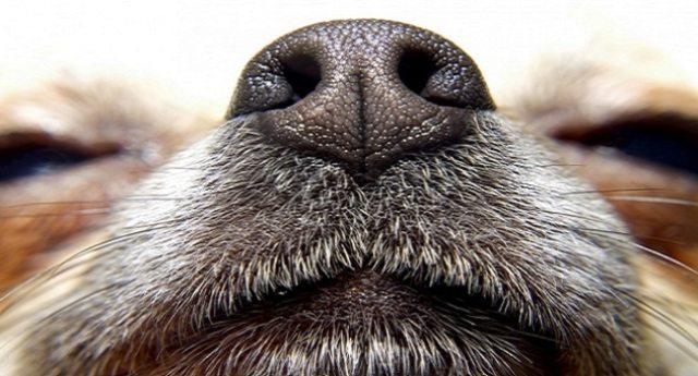 """Il Fiuto dei cani per """"annusare"""" e scoprire i tumori"""