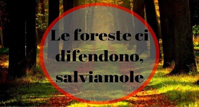 Le foreste ci difendono, salviamole – L'importanza e la bellezza delle foreste.