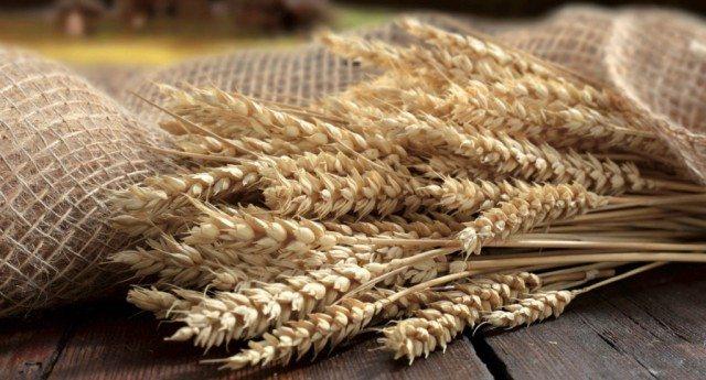 Grano antico e grano moderno: cosa sono?