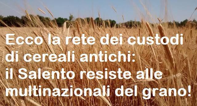 Ecco la rete dei custodi di cereali antichi: il Salento resiste alle multinazionali del grano