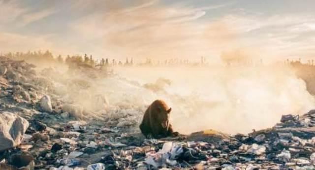 Orso seduto tra i rifiuti che cerca cibo: la foto simbolo della natura che grida aiuto!