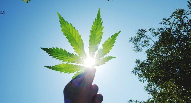 I dieci modi in cui la cannabis legale sta migliorando la vita negli Stati Uniti