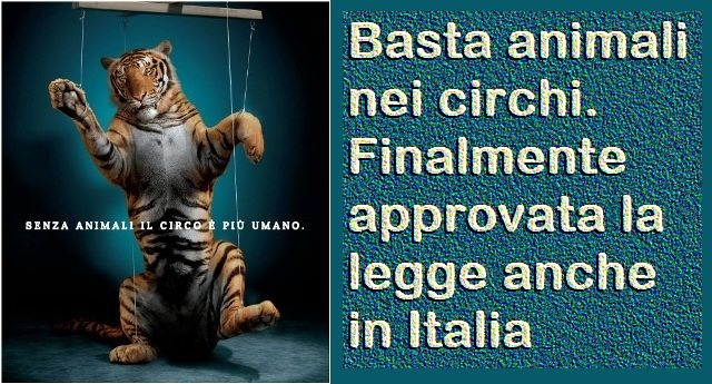 Basta animali nei circhi, finalmente approvata la legge anche in Italia