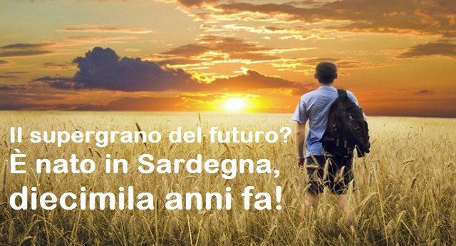 Il supergrano del futuro? È nato in Sardegna, diecimila anni fa!