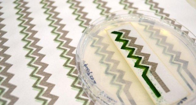 Una invenzione fantastica: la carta da parati solare che produce energia grazie ai cianobatteri.