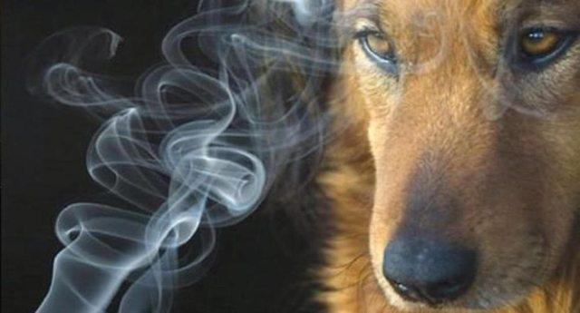 """Anche gli animali possono essere fumatori passivi – La ricerca sul tabagismo: """"I cani e i gatti dei fumatori vivono di meno"""""""