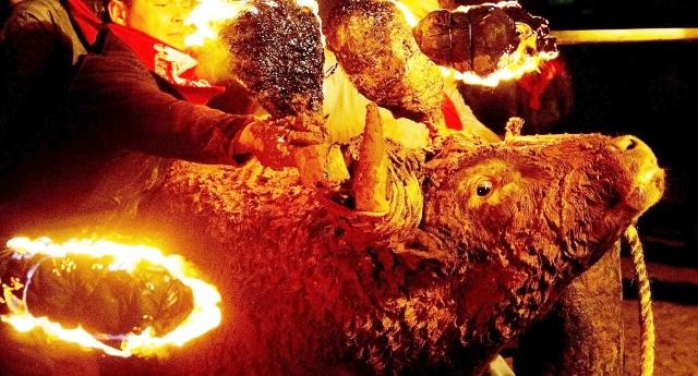 """Il Toro si suicida terrorizzato dal fuoco sulle corna: godetevi la schifosa tradizione del """"toro embolado"""", la più disgustosa tra le corride… Io, come uomo e (cosiddetto) essere umano me ne vergogno…!"""