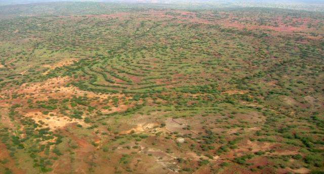 Il fenomenale caso della riforestazione del Niger