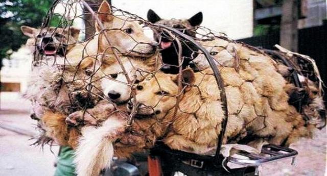 Le belle notizie che ci piace darvi – Il più grande mercato della carne di cane in Corea del Sud (2 milioni di animali ammazzati ogni anno!) chiude: diventerà un parco pubblico…!