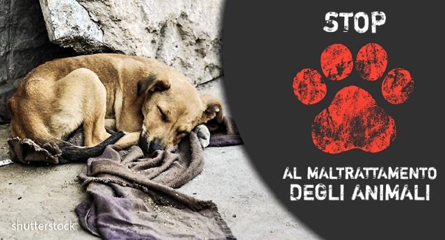 Maltrattamento di animali: che cosa fare e come denunciare crudeltà nei confronti degli animali…