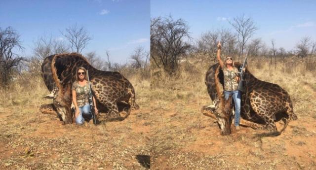 Per non dimenticare quanto la razza umana possa fare schifo – Non vi potete sbagliare, la CAROGNA non è il bellissimo e rarissimo esemplare di giraffa nera ammazzato…!