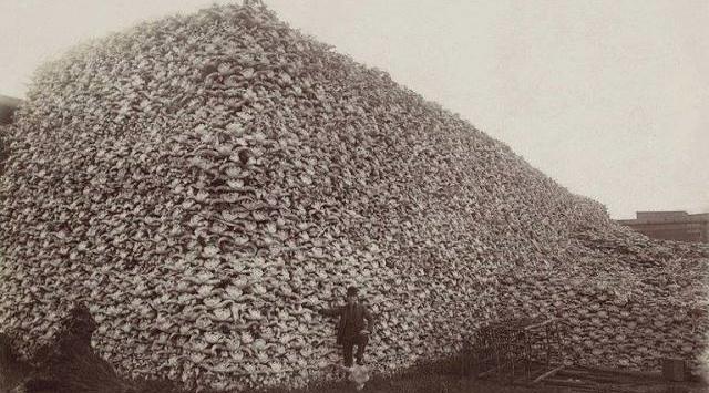 """La storia che non vi raccontano – La foto del 1870: un uomo bianco fieramente in posa sotto una montagna di teschi di bisonti…  Una schifosa carneficina per sostenere l'industria della carne bovina dei """"bianchi"""" e per affamare e sterminare le tribù indiane (leggi genocidio)…"""