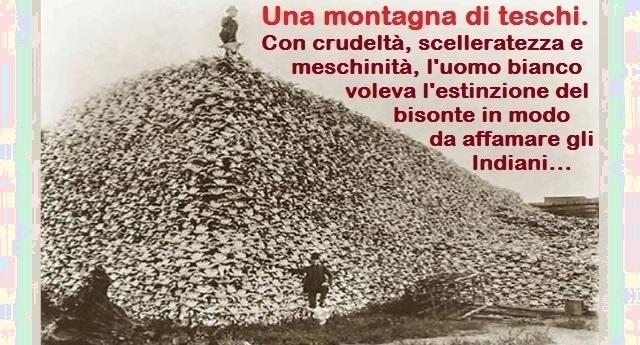 Ecco come i Nativi Americani stanno salvando il bisonte dall'estinzione voluta dalla crudeltà, dalla scelleratezza e dalla meschinità dell'uomo bianco